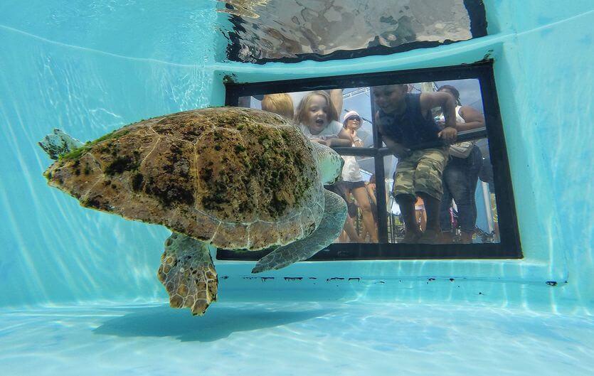 Loggerhead Marine Life Center in Palm Beach